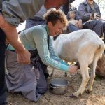 A woman milking a goat